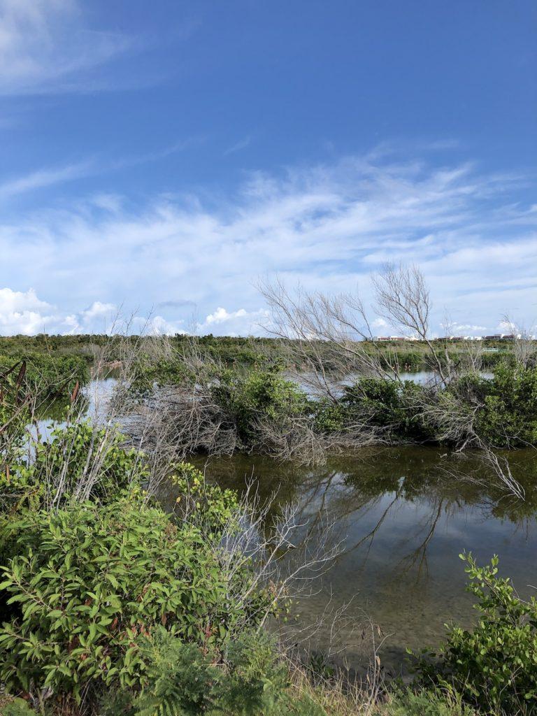 CayoSantamaria_mangrofen