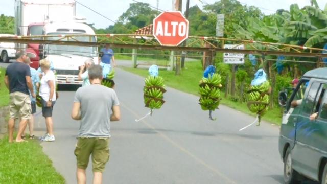 Costa-Rica-Bananen