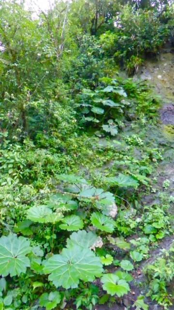 Costa-Rica-Pflanzen