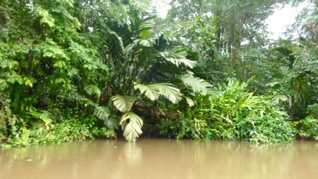Costa-Rica-Regenwald-Pflanzen
