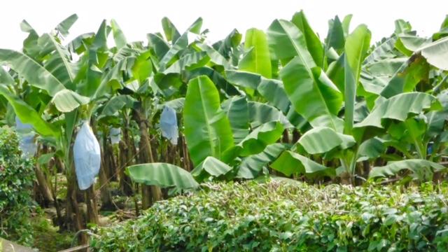 Costa-Rica-Regenwald-Pflanzen_3