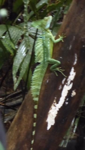 Costa-Rica-Regenwald-Tier