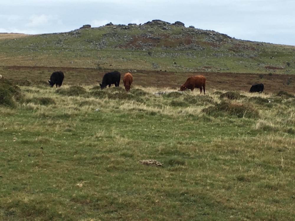 Darthmoor